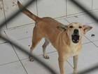 Justiça determina que UFV devolva cães usados em experimentos