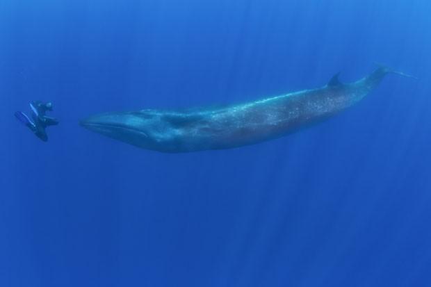 Reinhard Mink conseguiu um momento raro ao nadar a poucos centímetros de uma baleia-sei (Foto: Caters News/The Grosby Group)
