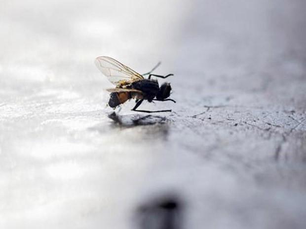 Imóveis mosca (Foto: Divulgação)