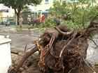 Prefeitura realiza ação emergencial contra queda de árvores em Belém