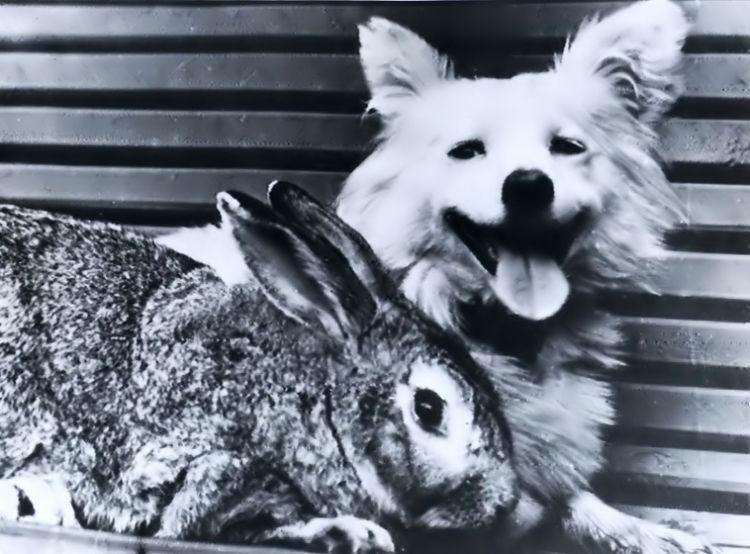 Otvazhnaya e seu amigo coelho (Foto: Divulgao)