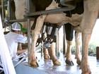Produtores preveem aumento da bacia leiteira na região de Itapetininga