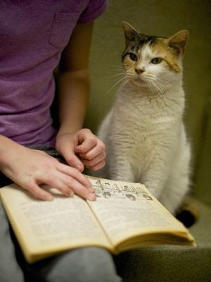 Companhia dos gatos dá conforto e segurança às crianças, segundo especialistas (Foto: Mark Makela/Reuters)