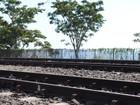 Projeto busca implantação de trem turístico em Presidente Epitácio