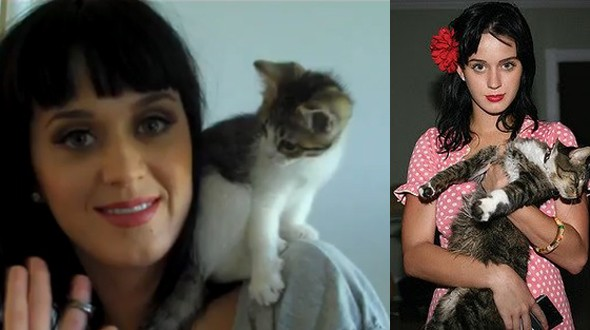 Katy Perry tem dois gatos, um deles chamado Kitty Purry (Foto: .)