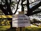Árvore é 'isolada' com fitas e avisos de 'cuidado' para tratamento antifungo