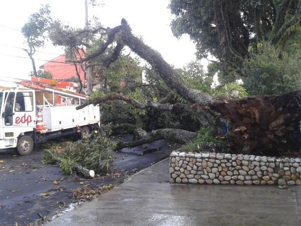 Mangueira caiu na rua Buenos Aires no Vista Verde e bloqueou o tráfego na via. (Foto: Márcio Rodrigues/ G1)