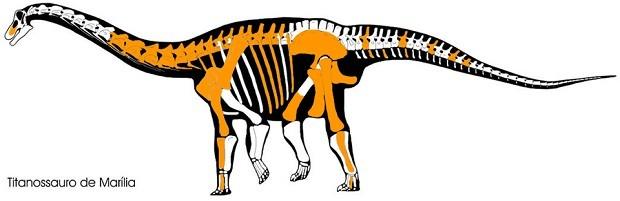Imagem mostra em laranja ossos de titanossauro achados em Marília, interior de SP (Foto: Reprodução)
