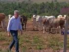 Em Mato Grosso, preço da vaca acompanha alta do boi gordo