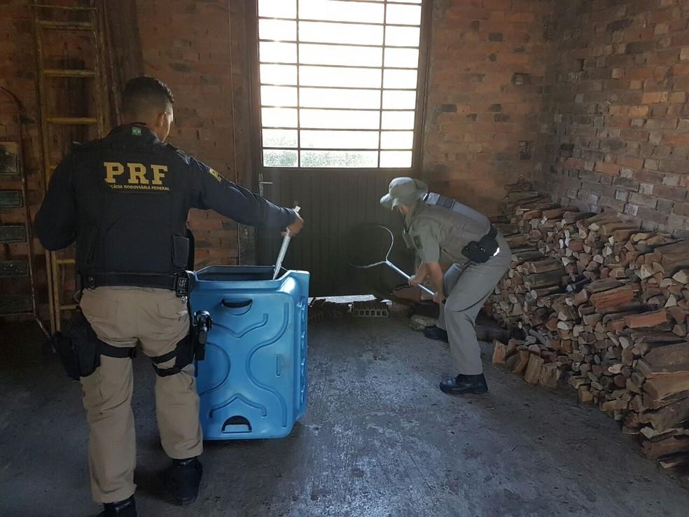 Policiais utilizam equipamentos na captura do macaco dentro da casa em Caxias do Sul (Foto: PRF/Divulgação)