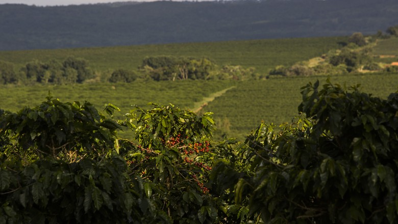 cafe_cerrado_mineiro (Foto: Marcelo Min/Ed. Globo)