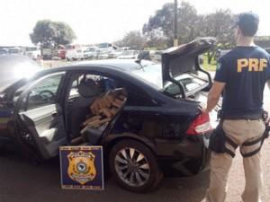 Droga ocupava porta-malas e banco traseiro do veículo (Foto: PRF/Divulgação)