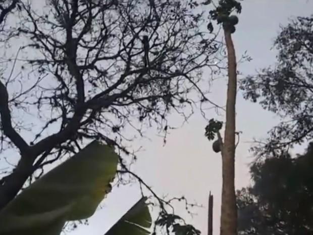 Animais subiram em galhos altos para não serem atingidos por chamas (Foto: Reprodução/TV TEM)