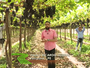 Produtores do Vale do São Francisco  ganharam destaque no 'Globo Rural'