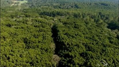Floresta Nacional de Passo Fundo, RS, reúne espécies raras e em extinção