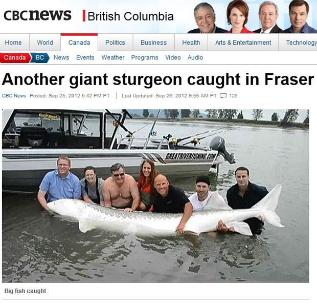Esturjão de 3,5 metros de comprimento e cerca de 500 quilos foi capturado no Canadá. (Foto: Reprodução)