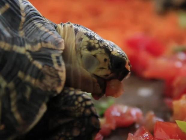 Tartaruga é atração em zoológico na Índia (Foto: BBC)