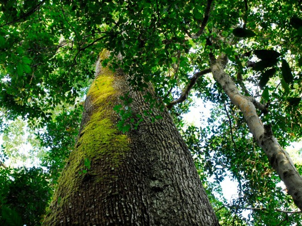 Banhado pelo Rio Cristalino, parque estadual no norte de Mato Grosso é um dos principais redutos protegidos de biodiversidade da Amazônia. (Foto: Marcos Vergueiro / Secom-MT)
