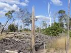 Queimada na Amazônia tem impacto mais severo na seca, aponta estudo