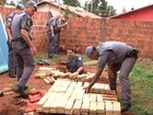 PM apreende 300 quilos de maconha enterrada em quintal de casa