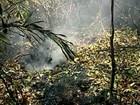 Incêndio em Itaúnas já dura 11 dias e queima área de turfa, no ES