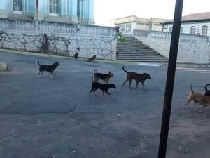 Cães passeiam em rua no Centro de Pitangui (Foto: Luciene Resende/Arquivo pessoal)