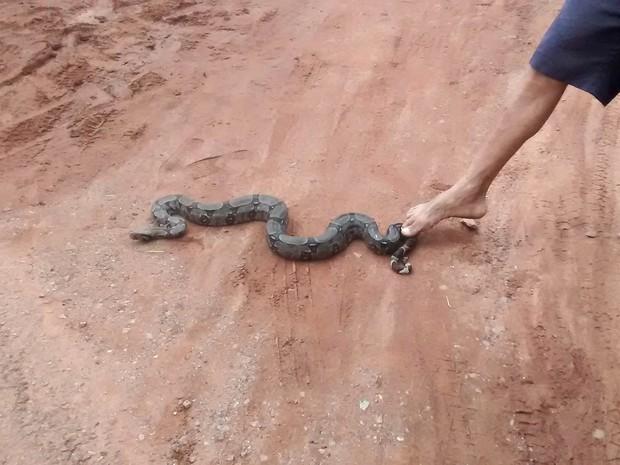 Cobra foi solta em área de mata distante do perímetro urbano (Foto: Jandira Vanin/ Centro América FM)