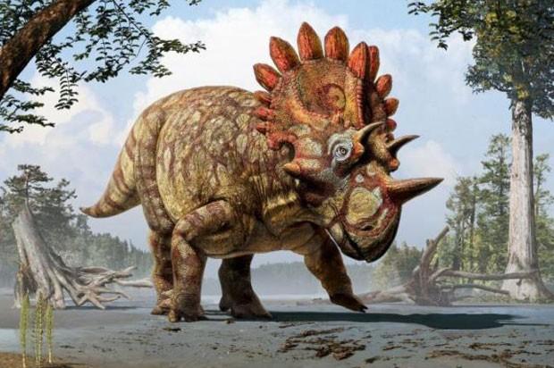Concepção artística mostra como seria o  Regaliceratops peterhews (Foto: Reprodução)