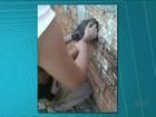 Gato é resgatado depois de ficar três dias preso entre muros; veja cena