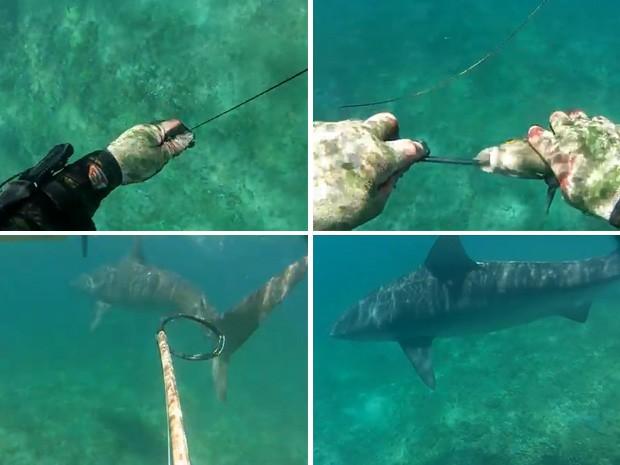 Tubarão-tigre apareceu repentinamente durante pesca submarina. (Foto: Reprodução)
