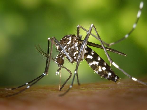 Repelente é crucial para evitar ser picado pelo Aedes aegypti (Foto: Divulgação)