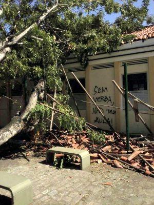 Árvore caiu no meio de campus da UFC (Foto: Daniel Macêdo / Arquivo Pessoal)