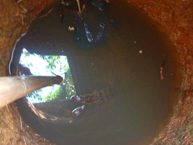 Dono de casa disse que jacarés são de estimação (Foto: Assessoria/ Polícia Militar-MT)
