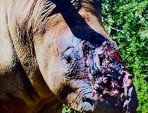 Kelly Slater posta foto de rinoceronte sem o chifre (Foto: Reproução/Instagram)