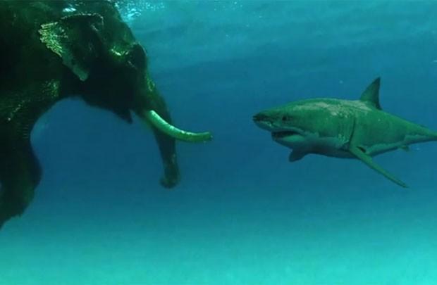Ao manipular fotos, responsável chegou a utilizar imagens de tubarões diferentes (Foto: Reprodução/YouTube/Billschannel)