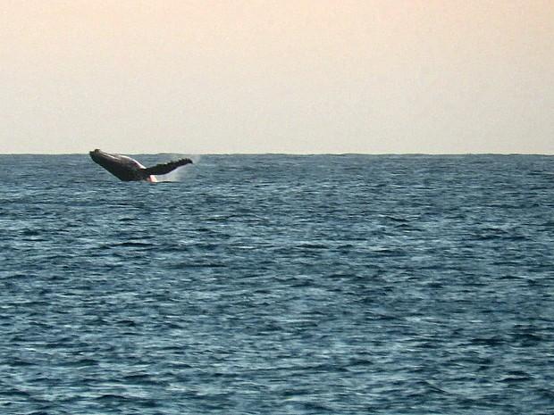 Saltos são registrados por banhistas (Foto: Lucas Fonseca/ Arquivo Pessoal)