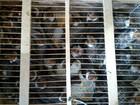 MP apreende 500 animais silvestres em feiras livres do interior de Alagoas