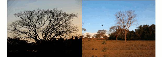 Vegetação típica do Cerrado (Foto: Caliandra do Cerrado)
