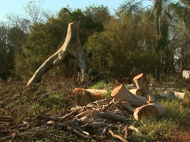 Segundo superintendente da GCM, derrubada de árvores acontecia há muito tempo (Foto: Ronaldo Gomes/EPTV)