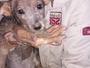 Cachorra cai em bueiro e é resgatada após 12h em Volta Redonda, RJ