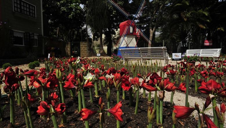 holambra_flores (Foto: Ernesto de Souza / Editora Globo)