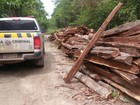 Sete são presos em ação de combate à exploração ilegal de madeira no PA