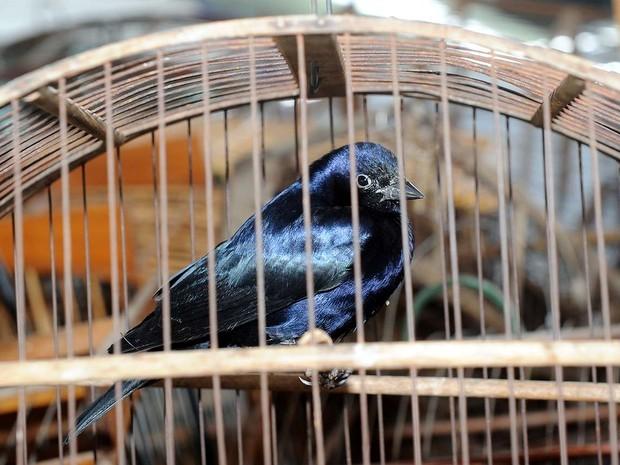 Guarda Municipal de Limeira recolhe 29 pássaros após devolução voluntária de morador do bairro Nova Suíça (Fot Wagner Morente/Prefeitura de Limeira)