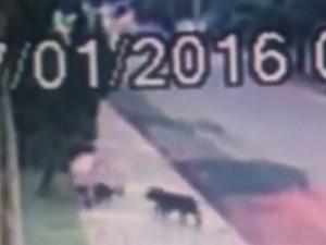 Moradora contou que ela e seu cão foram atacados por doi cachorros Goiânia Goiás (Foto: Reprodução/TV Anhanguera)