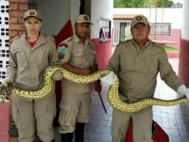 Sucuri já estava enrolada em cachorro quando equipe chegou ao hotel (Foto: Corpo de Bombeiros/Divulgação)