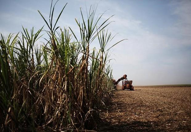 Colheitadeira corta cana-de-açúcar em campo na propriedade do Grupo Moreno em Ribeirão Preto ; safra agrícola ; agricultura ;  (Foto: Nacho Doce/Reuters)