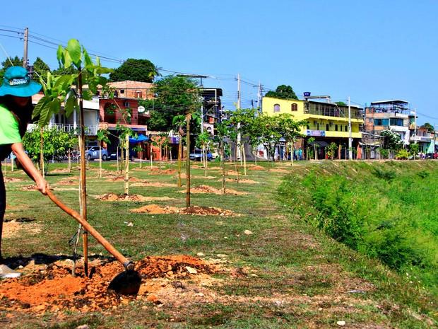 Semmas divulgou que fez o plantio de 10 mil mudas árvores no projeto Arboriza Manaus (Foto: Karla Vieira/Semcom)