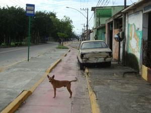 Cães circulam pela ciclovia da Zona Oeste do Rio. (Foto: Mariucha Machado/G1)