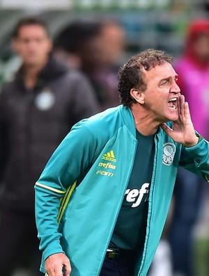 BLOG: Palmeiras, Uma Boa Discussão