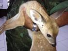 Após denúncia, animais silvestres são resgatados em Boa Vista